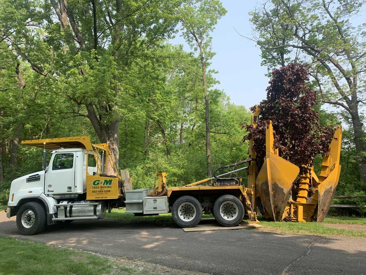 Commercial Tree Transportation