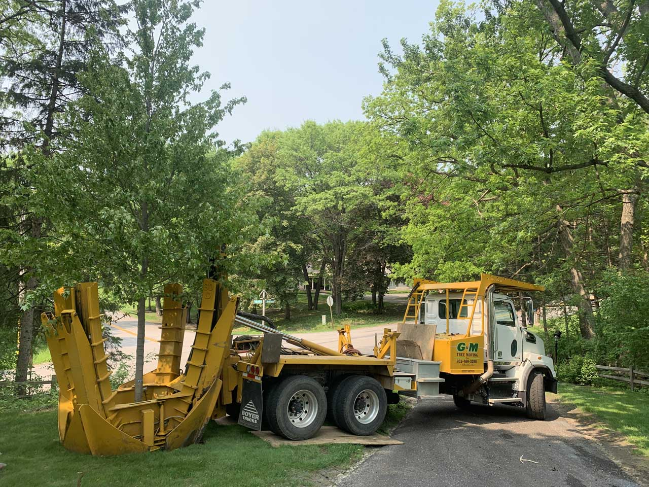Residential Tree Moving